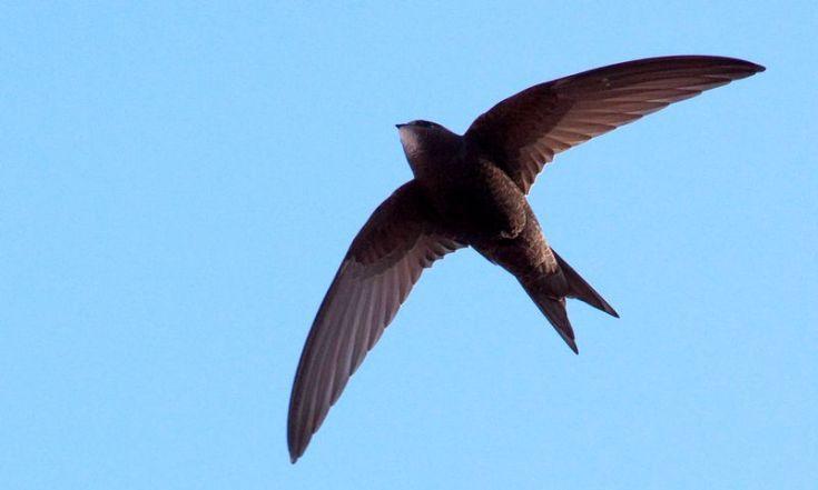 Burung walet menghasilkan sarang burung sayap walet